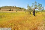 Koilada (Kilada) | Argolis Peloponessos | Griekenland foto 12 - Foto van De Griekse Gids
